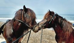 Best destination: Here's why you should consider a horse-riding holiday in Denmark